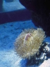 aop-2010-03-28-anemones3.jpg