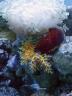 aop-2010-03-28-anemones4.jpg