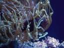 aop-2010-03-28-anemones8.jpg