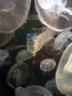 aop-2010-03-28-jellyfish4.jpg
