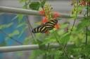 steinhart-2009-10-26-butterfly.jpg