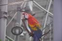 steinhart-2009-10-26-macaw.jpg