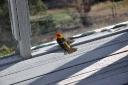 bird-2009-05-08b.jpg