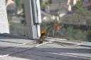 bird-2009-05-08g.jpg