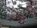 marchatmoms-magnolia2.jpg