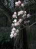 marchatmoms-magnolia6.jpg