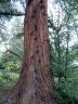 marchatmoms-redwood1.jpg