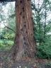 marchatmoms-redwood2.jpg