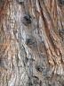 marchatmoms-redwood3.jpg