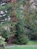 marchatmoms-redwood4.jpg