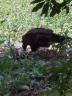 vulture-2010-05-28d.jpg