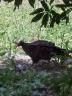 vulture-2010-05-28e.jpg
