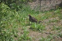 vulture-dave-2.jpg