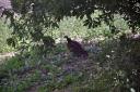 vulture-dave-5.jpg