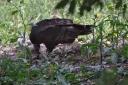 vulture-dave-6.jpg