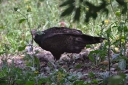 vulture-dave-7.jpg