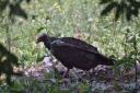 vulture-dave-8.jpg